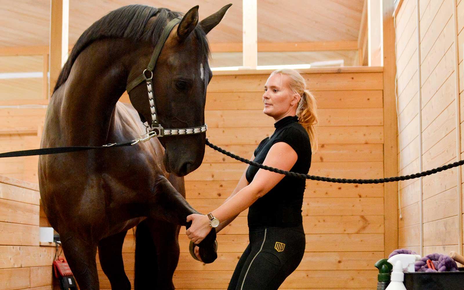 Rehab och friskvård för din häst