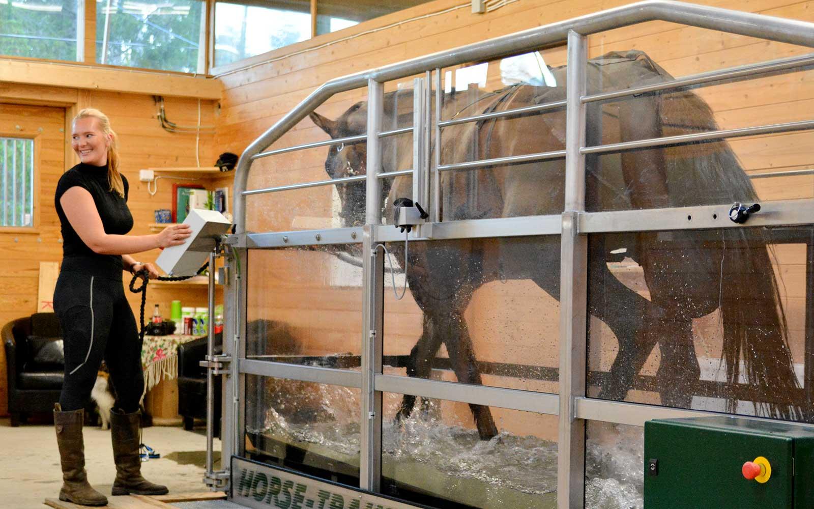 Vattenbandsträning för hästar